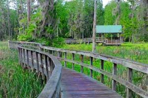 phinizy swamp 1 (1)